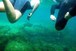 sharkswim1 sm