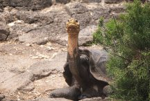 turtle at darwin sm