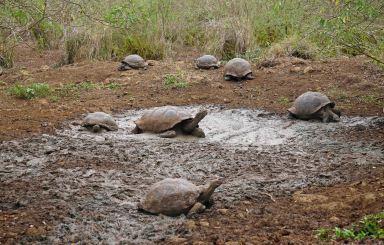 turtle group 1 sm
