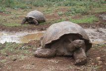 turtles sm
