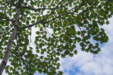 7 tree and sky sm