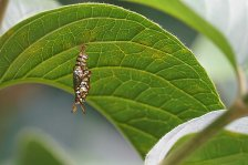 14 sparkly caterpillar sm