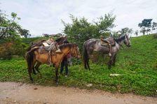 36 horses sm
