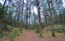 56 parque Arvi trees sm
